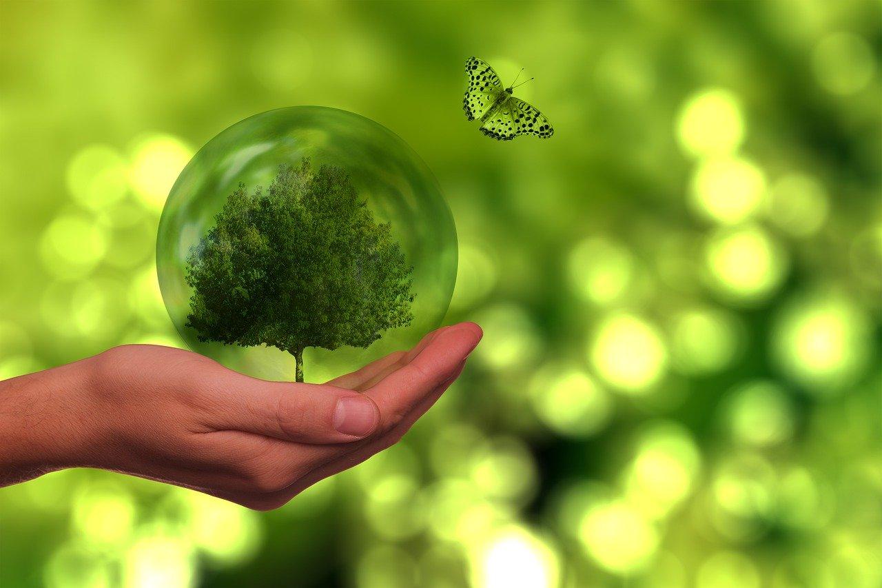 Sostenibilità e green, startup, intelligenza artificiale