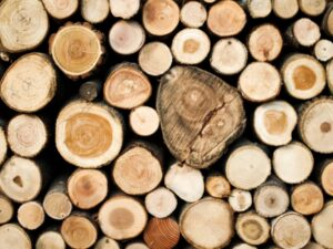bioplastica, legno, sostenibilità